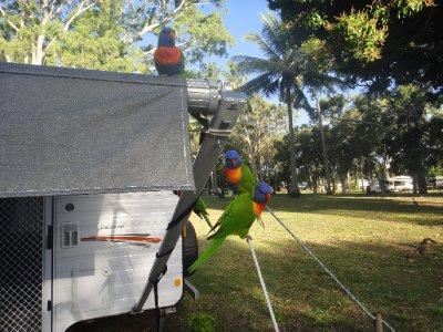 Queensland2012_0671.jpg