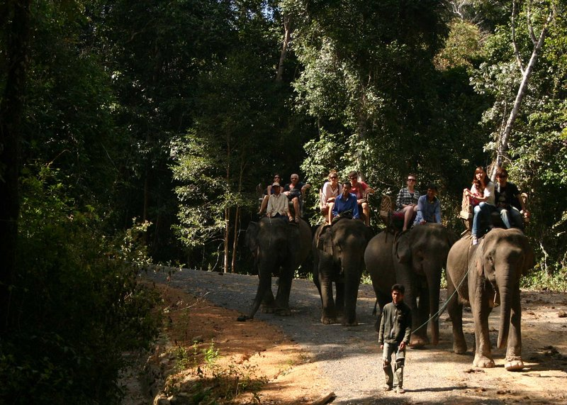 Elephant Trekking at Phou Asa