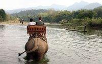 Elephant Trekking in Luang Prabang, Laos