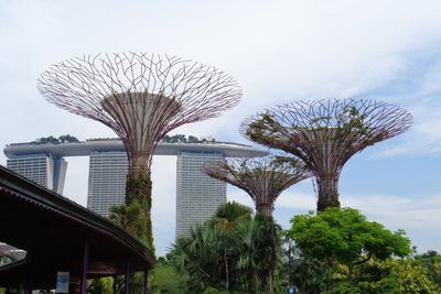 The super trees and the Marina Bay Hotel.