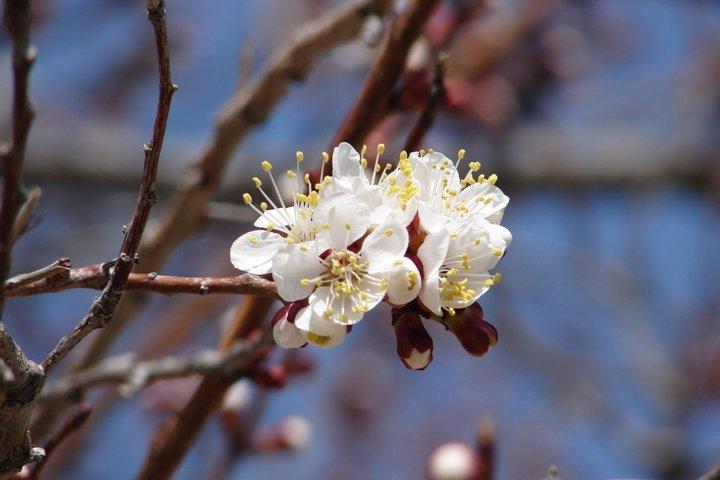 A spring blossom.