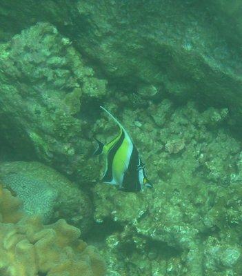 Yellow_Fish.jpg