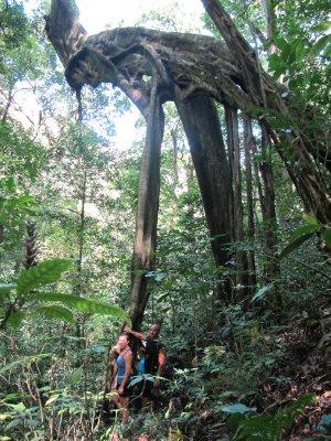 The jungle hike