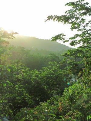 The jungles of Honduras