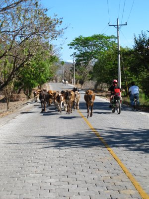 Watch for these road hazards while driving around Ometepe