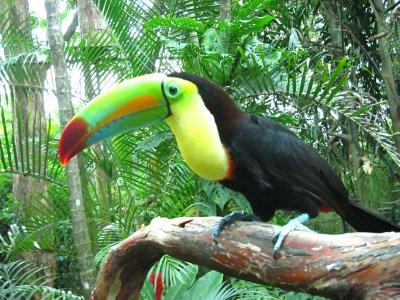The amazing Toucan