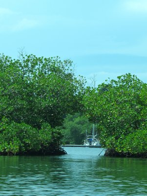 Narrow passages through the mangroves lead to the Dolphin Bay