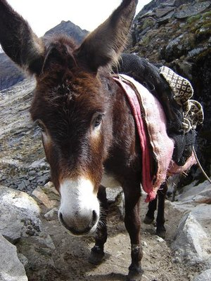 Donkey - Santa Cruz circuit in the Huaraz area