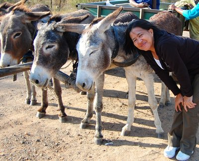 Of course, the donkeys and me in Zimbabwe.