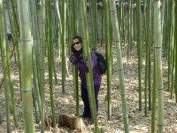 van-bamboo.jpg
