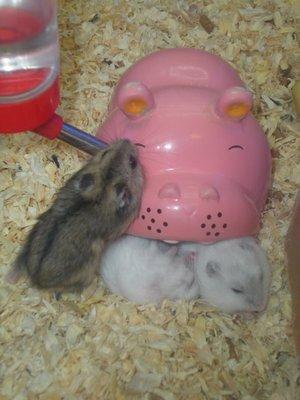 mice sleeping in the hippo, so cute!