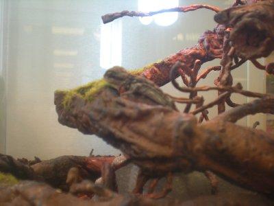 Tiny pet lizard