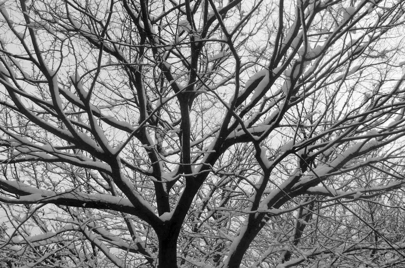trees in the snow