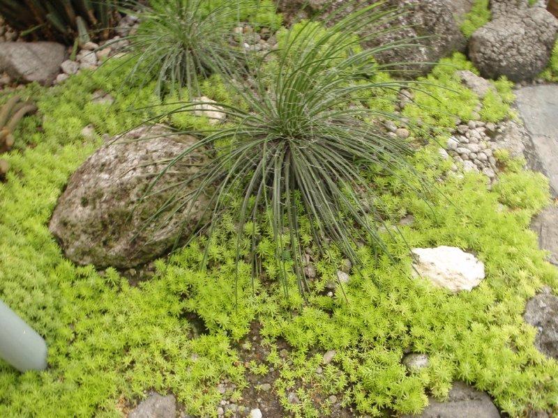 Cactus Garden on Roof Top