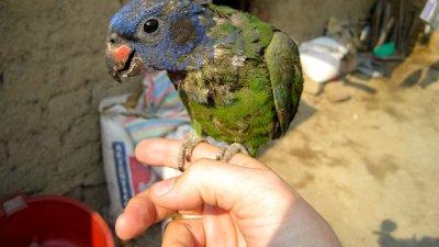 IJT_Parrot.._Finger.jpg