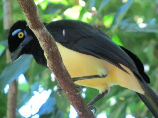 tropical bird at Iguazu