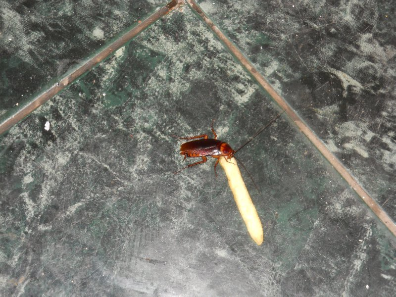..and a cockroach eating one of my chips