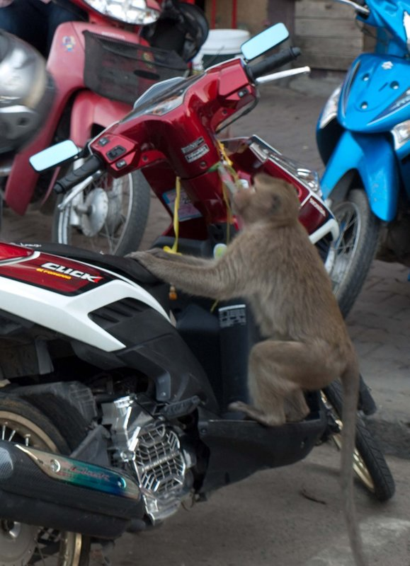 Monkey taking a ride