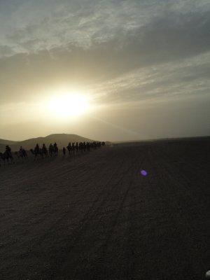 Camel train in the Gobi Desert