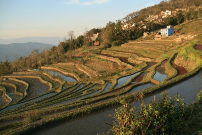 Terraces Only Moments Out of Xinjie