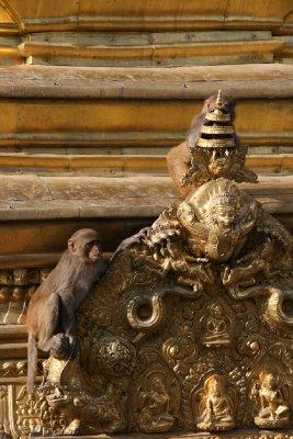 Monkey Mischief at Monkey Temple