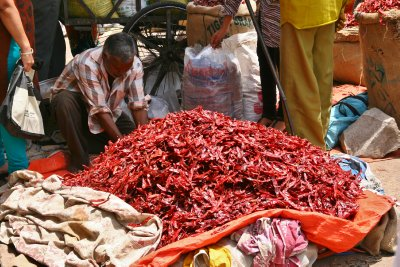 Up to the Elbows in Red Hot Chillies in the Pink City