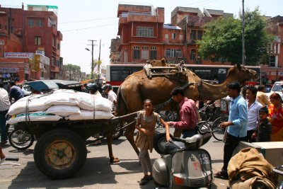 Camel Cart through the Pink City