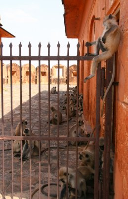A Multitude of Monkeys!