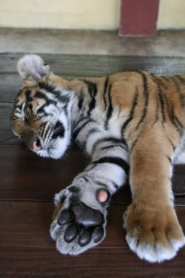 Big Paws!