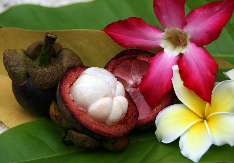 Mangosteen &#39;The Queen of Fruits&#39;