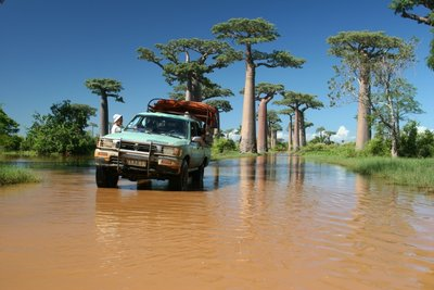 Flooded Avenue of Baobabs