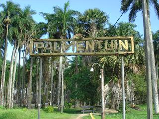 Palmentuin