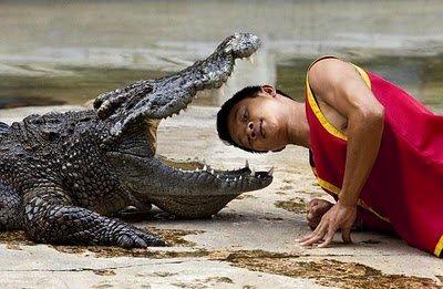 Crocodile_.._line_2.jpg
