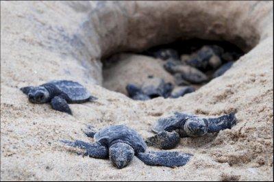 baby-turtles.jpg