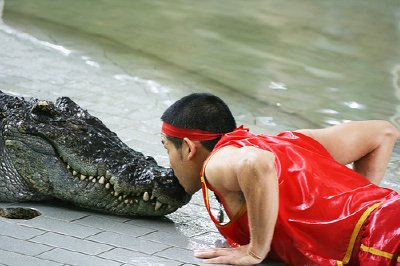 crocodile-farm2.jpg