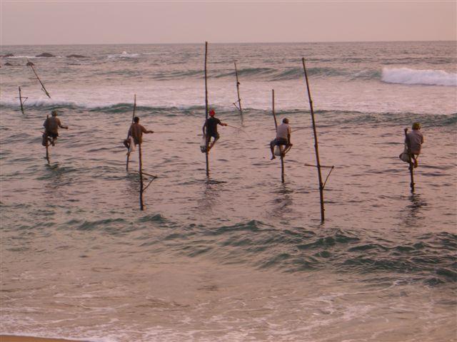 Stilt Fishermen at Weligama