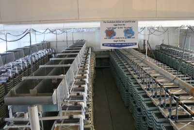 Fish Hatchery in Washington...there are 6500 eggs per tray.  Makes about 15 million fish.