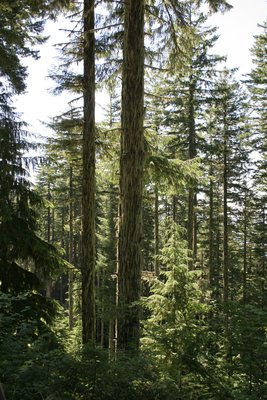 Oregon has the tallest trees....