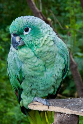 Parrot in Lucre