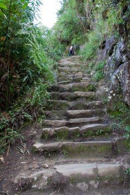 Ascent up Waynu Picchu