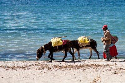 Donkeys on the beach, Isla del Sol