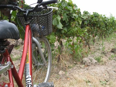 Bikes and vines