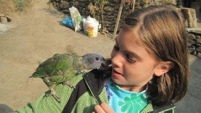 Jungle Parrot