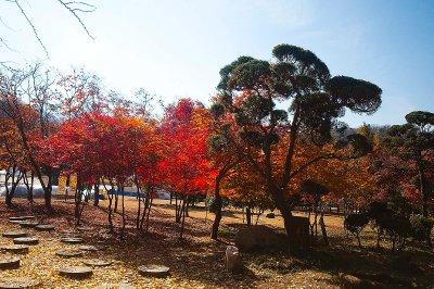 Nami Island in korea