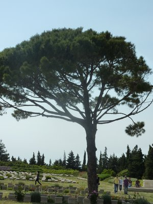 Lone Pine Memorial at Gallipoli