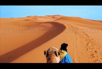 Merzouga desert.