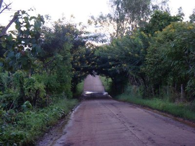 The road we biked on