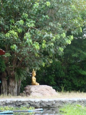 The buddha under the tree outside the Wat