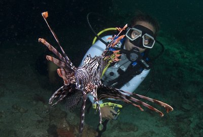Lionfish gazing - thanks Christoph <img class='img' src='http://www.travellerspoint.com/Emoticons/icon_smile.gif' width='15' height='15' alt=':)' title='' />
