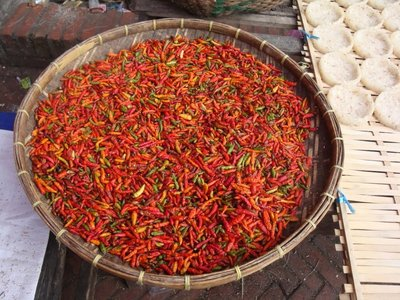 Drying red chillies!